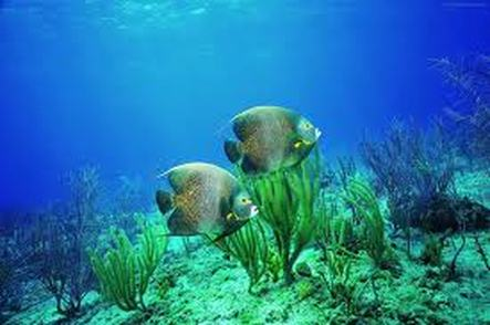 Marine Biome Mr Twomey Biology Class